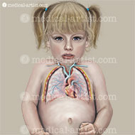 Anatomy illustrations of the respiratory system of a three year old boy