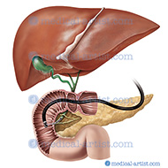 The function of the gallbladder is to store bile