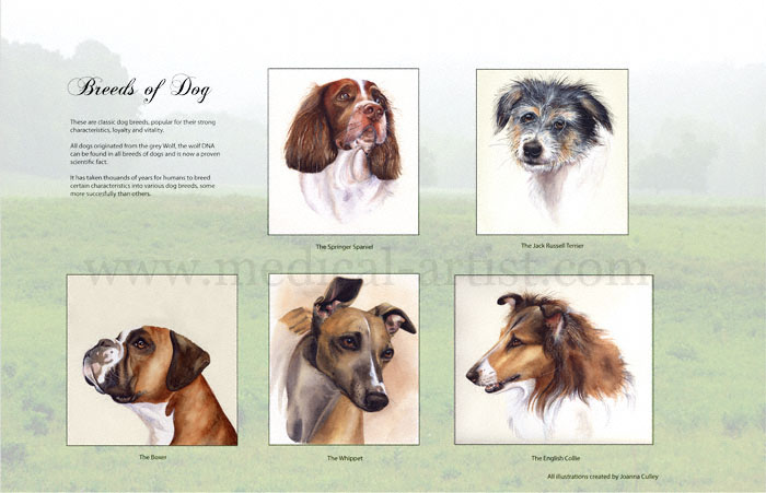 dog breeds of world poster. of dog breeds for a poster