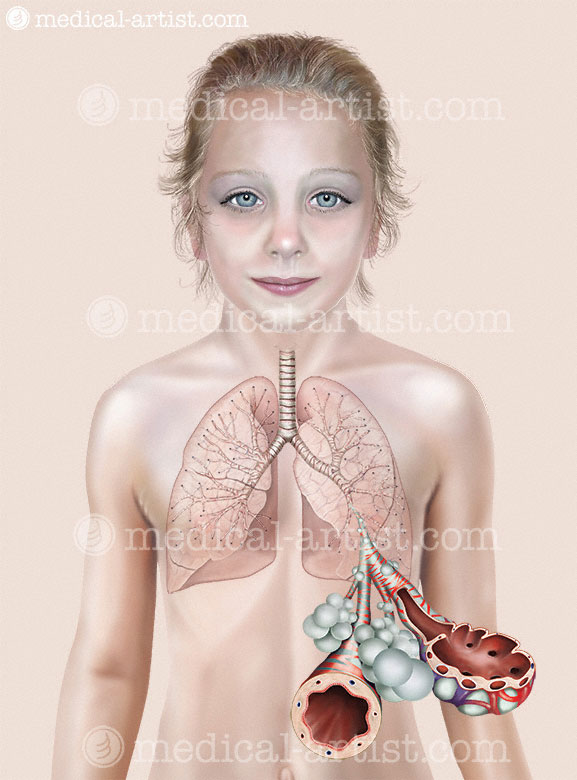 Anatomical Illustrations of the Respiratory System in Children ...