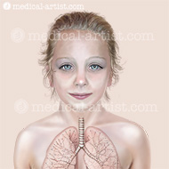 Healthy lungs and alveoli