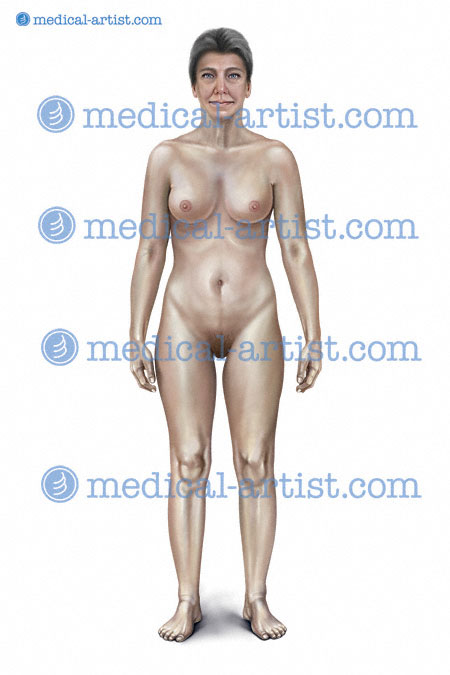 Anatomy of female human breast