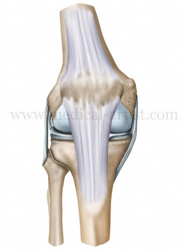 Professional Medical Illustrations Orthopaedic Images