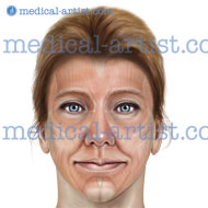 Anatomy female facial muscles and neck