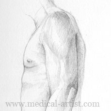 An anatomy art study in pencil of the arm in left lateral view