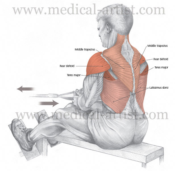Seated cable row (aka pulley row) is a great back exercise ...