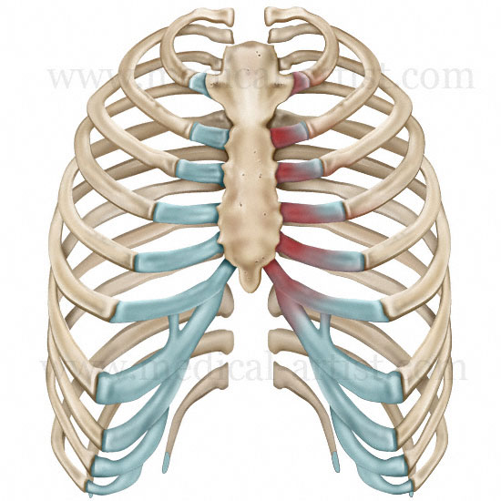 Pathology Illustrations   Medical Illustrations of Human Diseases  u0026 Conditions   Eczema, Liver