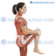 Standing knee to chest muscle anatomy