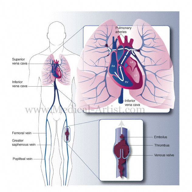 circulatory system heart diagram. Medical diagram of heart,