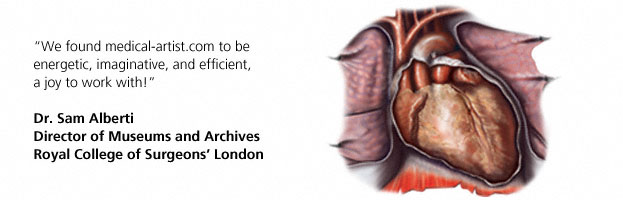 Testimonial for medical illustrations for the Royal College of Surgeons on England Exhibition