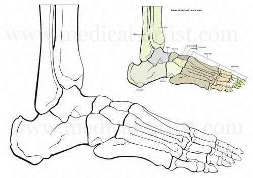 Traditional Pen And Ink Medical Illustrations Gallery Hand Draw By Joanna Culley
