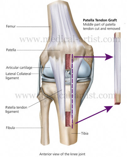 Knee And Related Knee Anatomy Images And Medical Illustrations