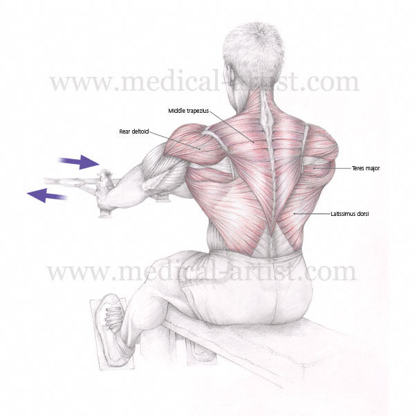 Medical illustrations of Muscles Used In Exercise & Sport ...