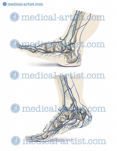 Anatomical medical illustrations and medical legal illustration by ...