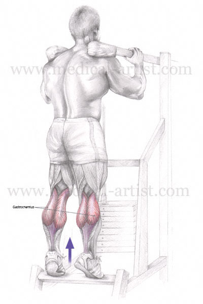 Medical Illustrations Of Muscles Used In Exercise  U0026 Sport
