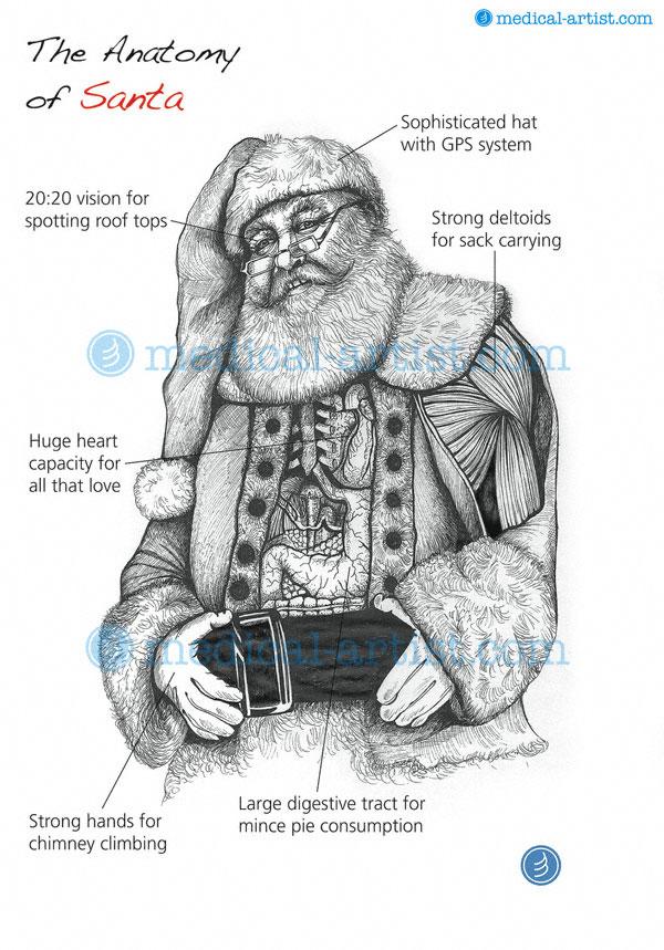 Anatomy of Santa Christmas Card | Father Christmas Anatomy Card 2012