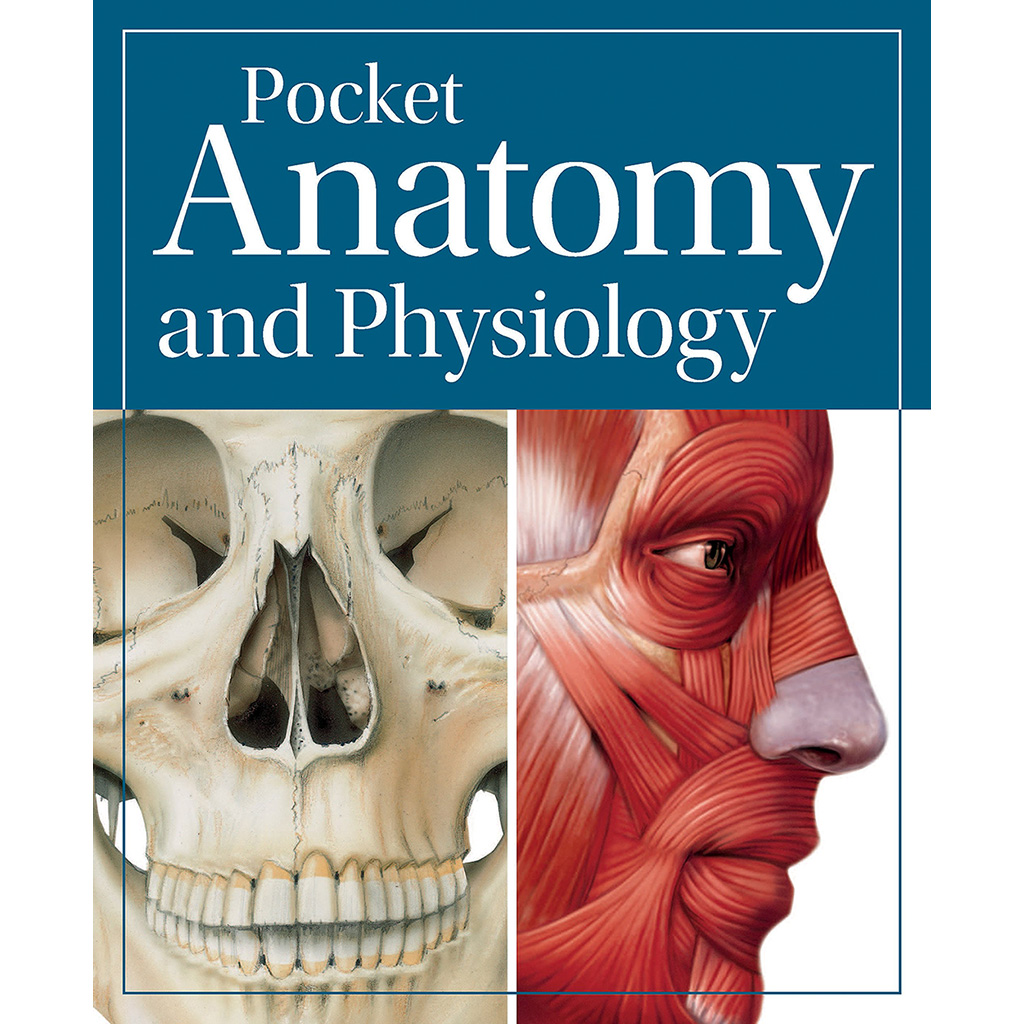 Pocket Anatomy & Physiology | Medical Artist Portfolio