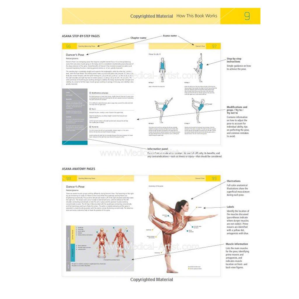 The Student\'s Manual of Yoga Anatomy | Medical Artist Portfolio