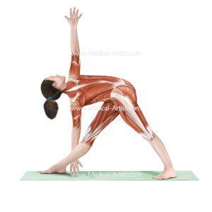 Revolved triangle yoga pose