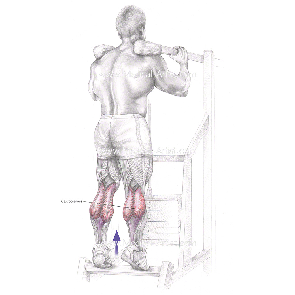 Pencil Illustration of a standing calf raise exercise