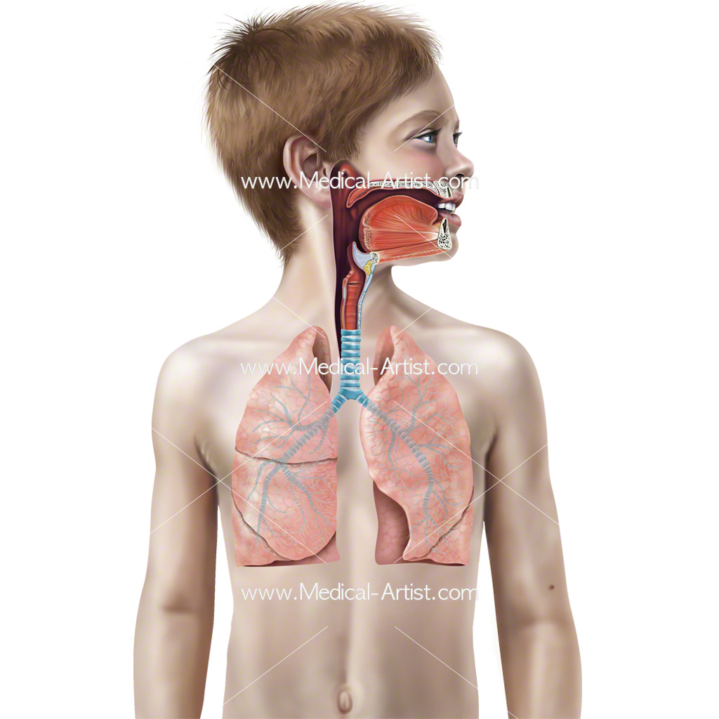 Paediatric Illustrations Anatomy Pathology Of Children Medical