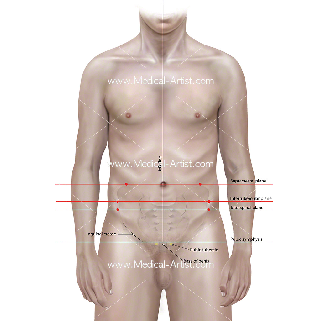 The anatomical planes of the body explanation
