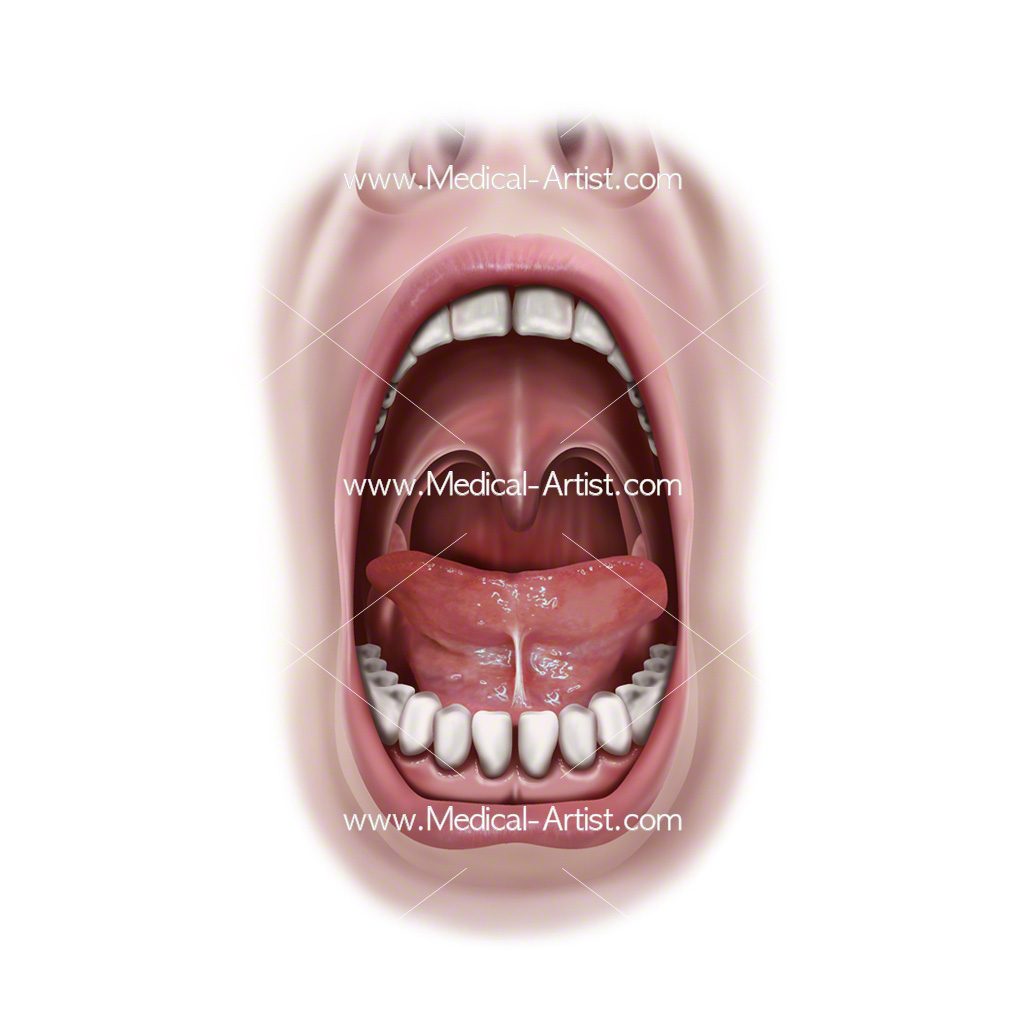 Oral cavity view
