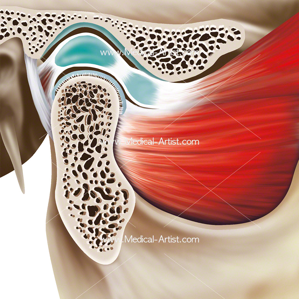 Close up illustration of the anatomy of the temporomandibular joint
