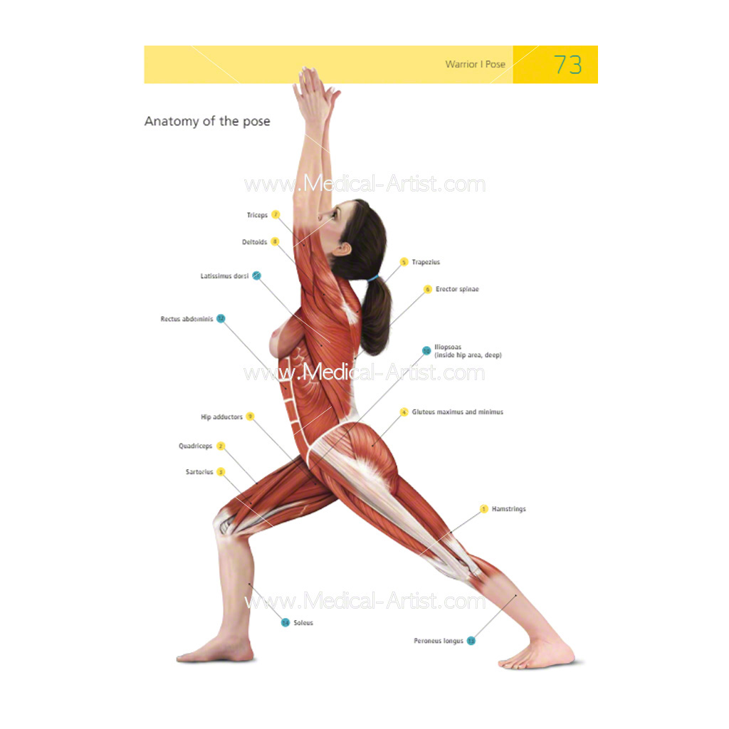 The Student\'s Manual of Yoga Anatomy | Medical Artist Portfolio