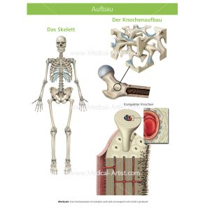 Osteoporosis guide with labelled illustrations and the full human skeleton