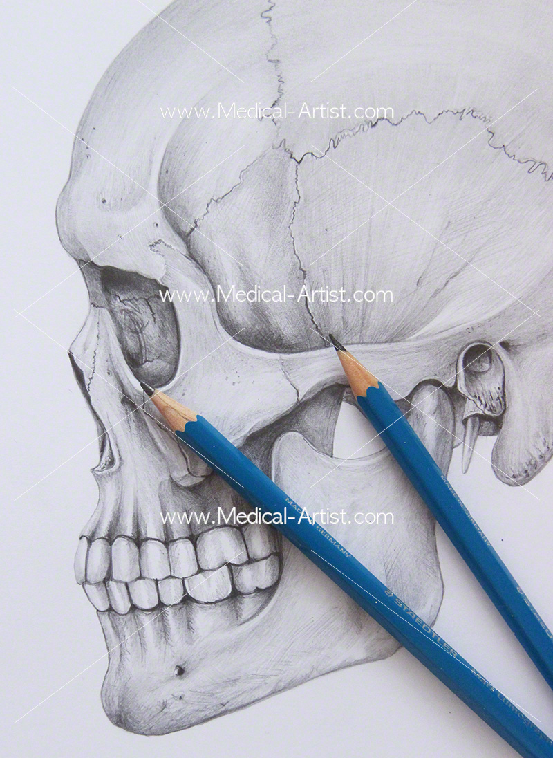 Pencil medical illustration