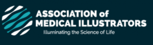 Association of Medical Illustrators Logo AMI