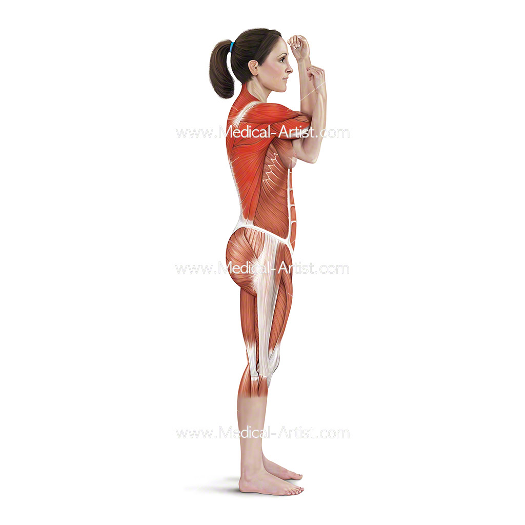 Medical illustration showing across chest shoulder stretch