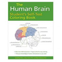 Human brain anatomy colouring book cover