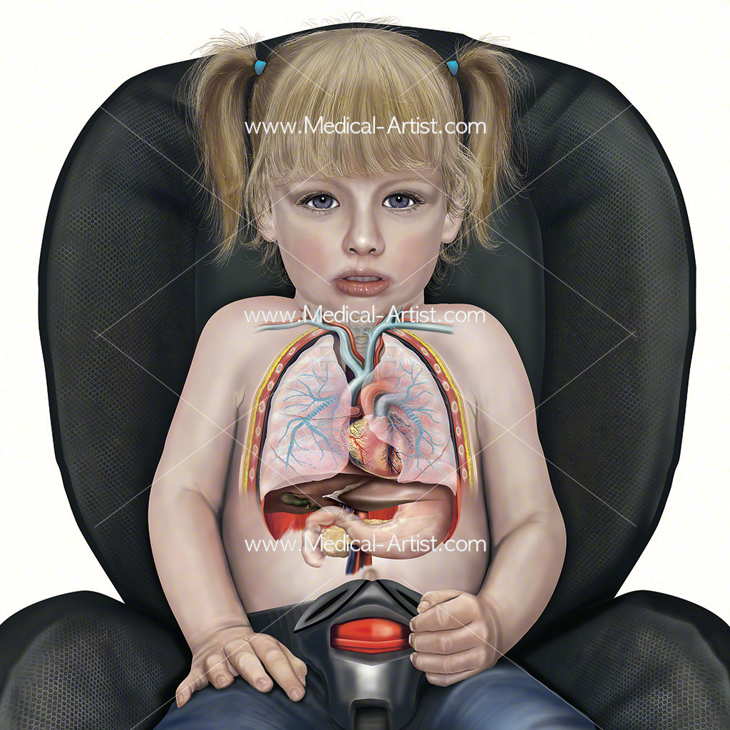 Internal anatomy of a child