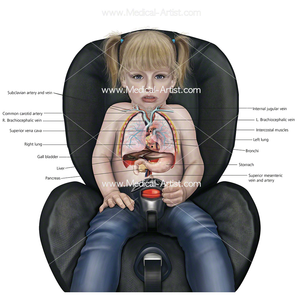 Child in car seat showing internal anatomy