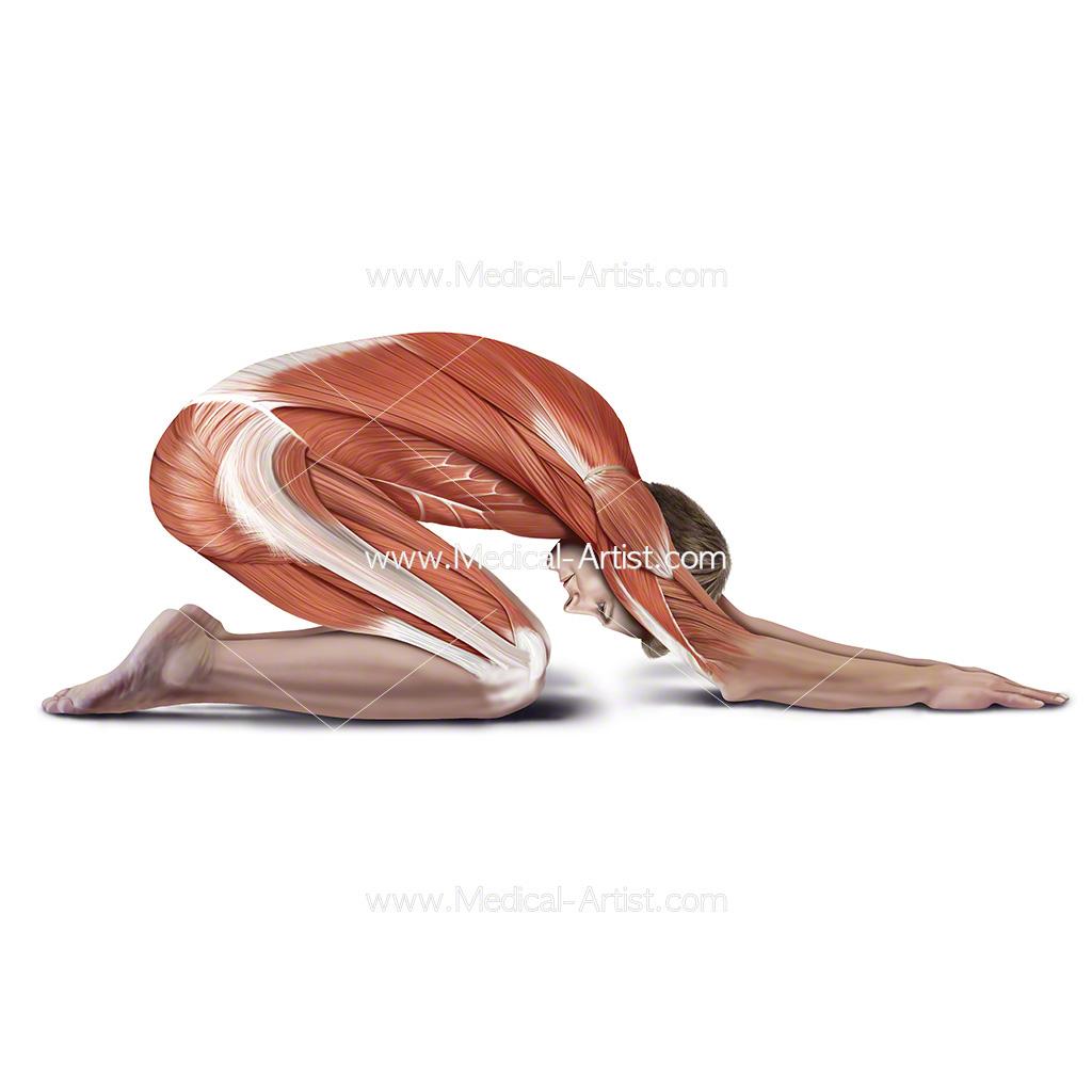 Medical illustration showing child pose stretch