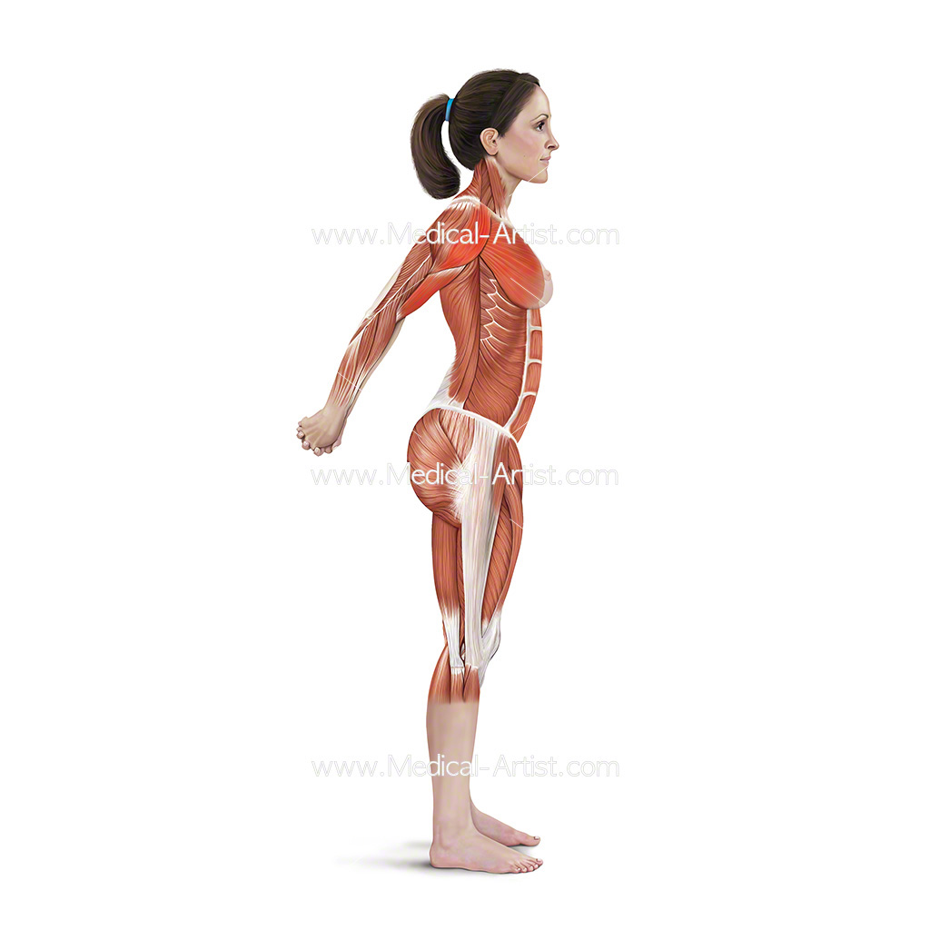 Medical illustration showing double arm stretch