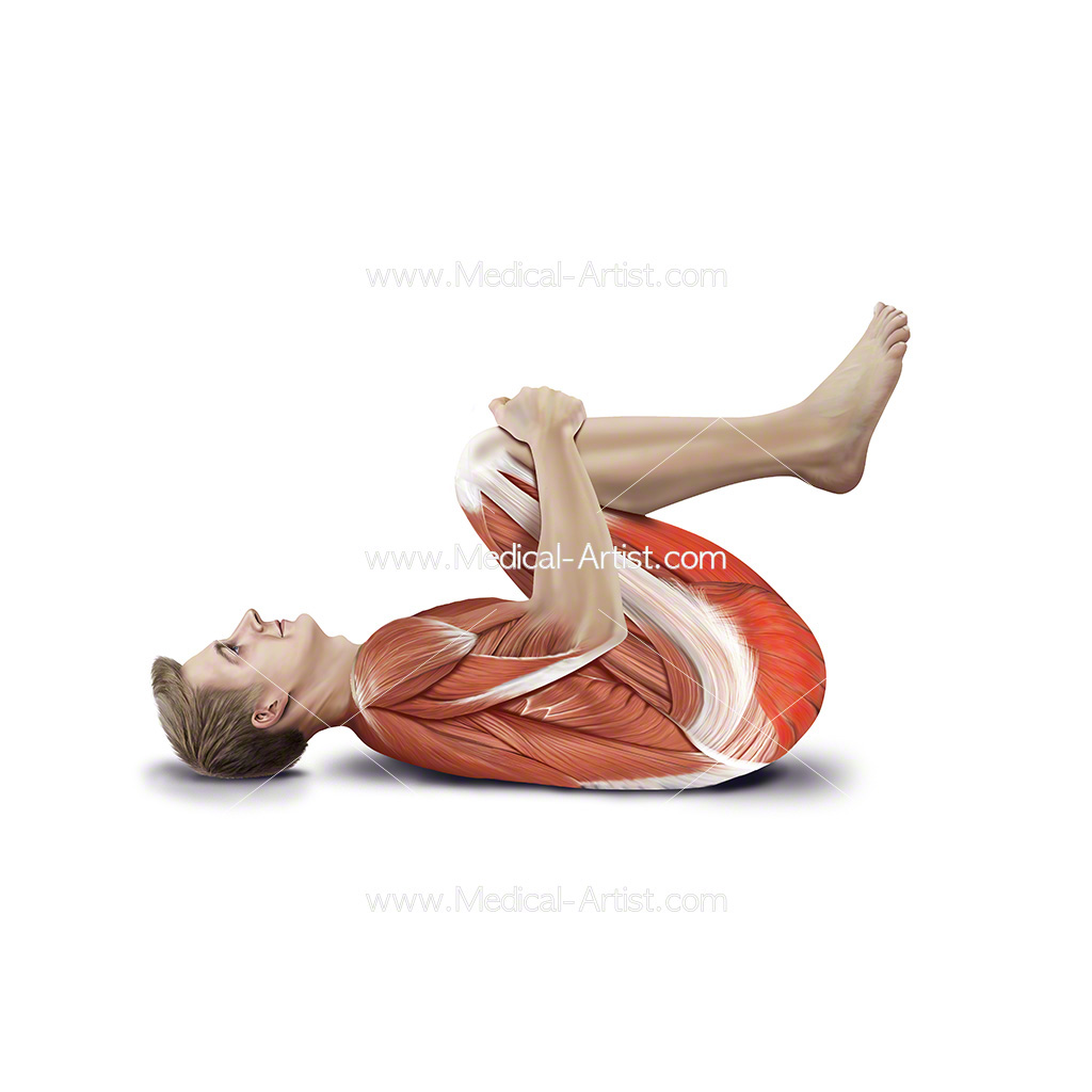 Medical illustration showing double knee stretch