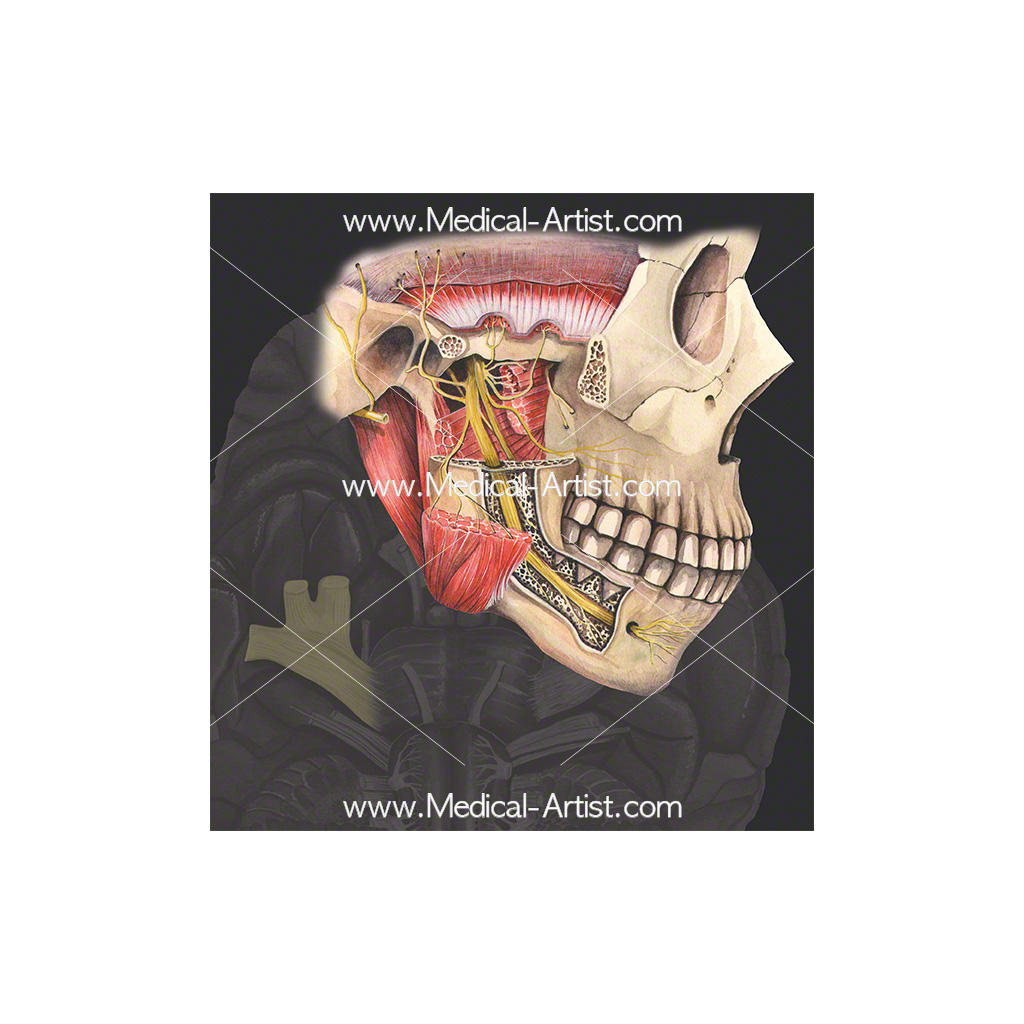 Cranial nerve 5