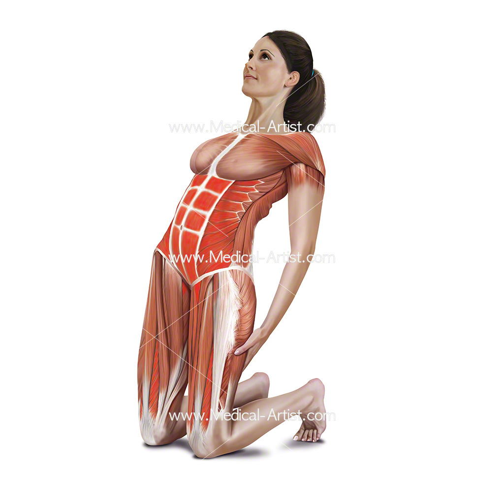 Medical illustration showing kneeling adbomen stretch