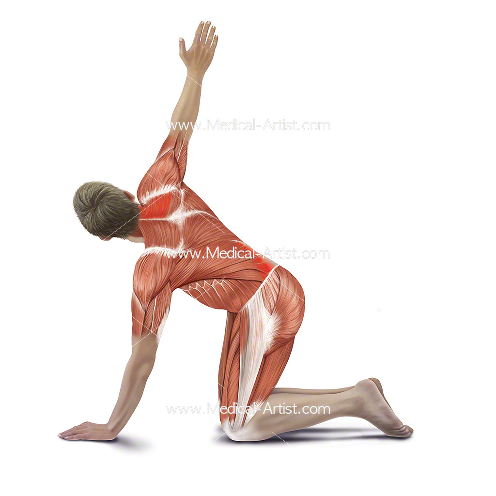 Medical illustration showing kneeling back stretch