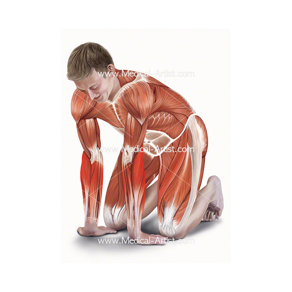 Medical illustration showing kneeling forearm stretch