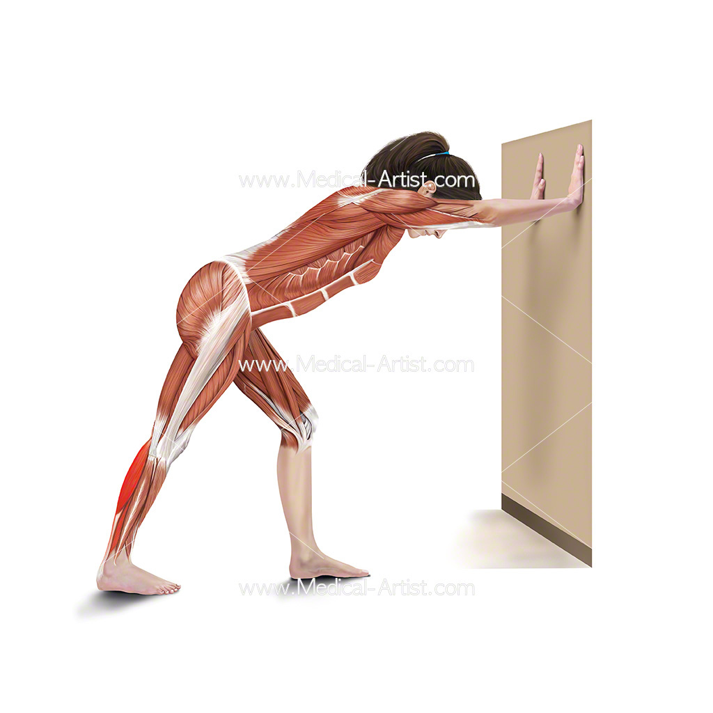 Medical illustration showing leaning calf stretch