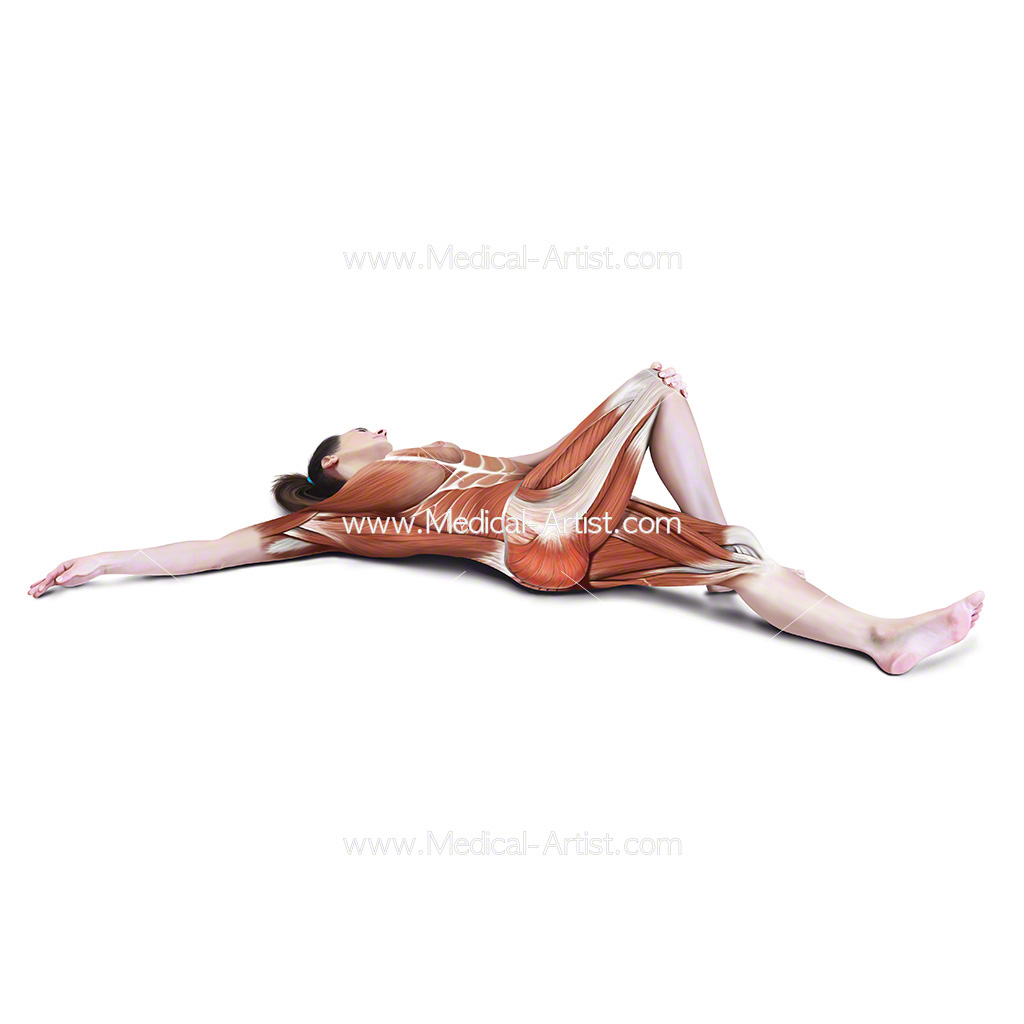 Medical illustration showing lying cross over stretch