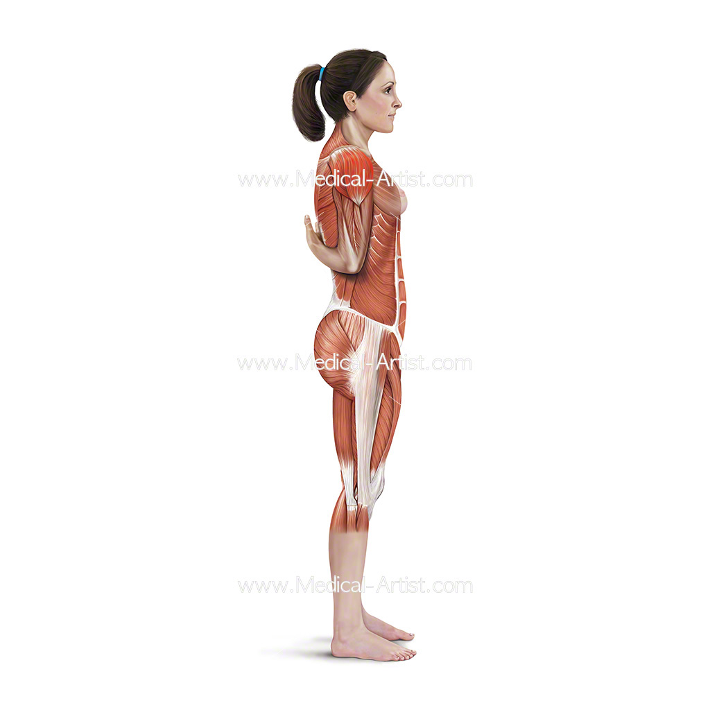Medical illustration showing one arm flexor stretch