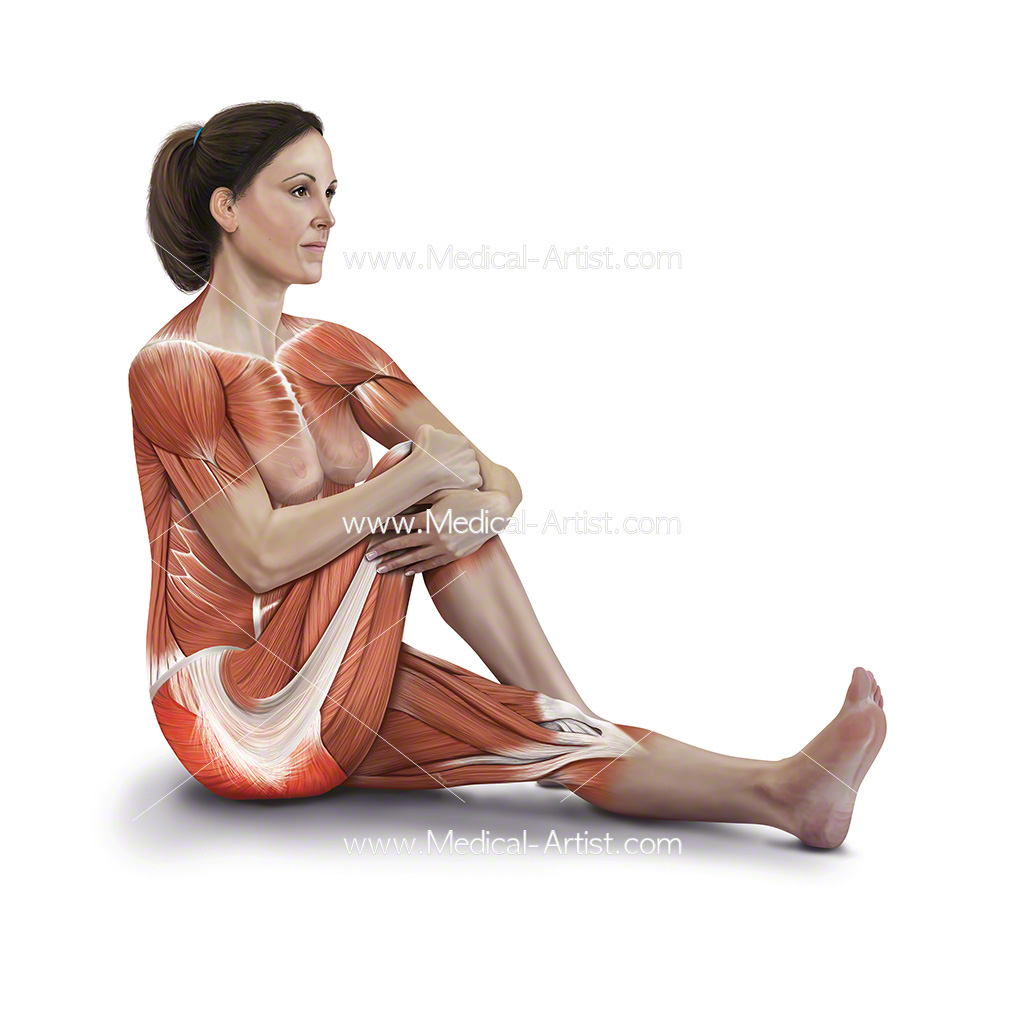 Medical illustration of the sitting buttock stretch