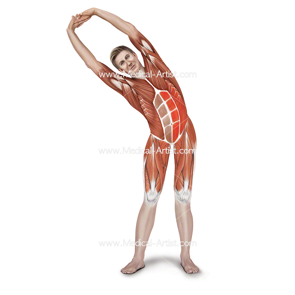 Medical illustration of the standing side stretch