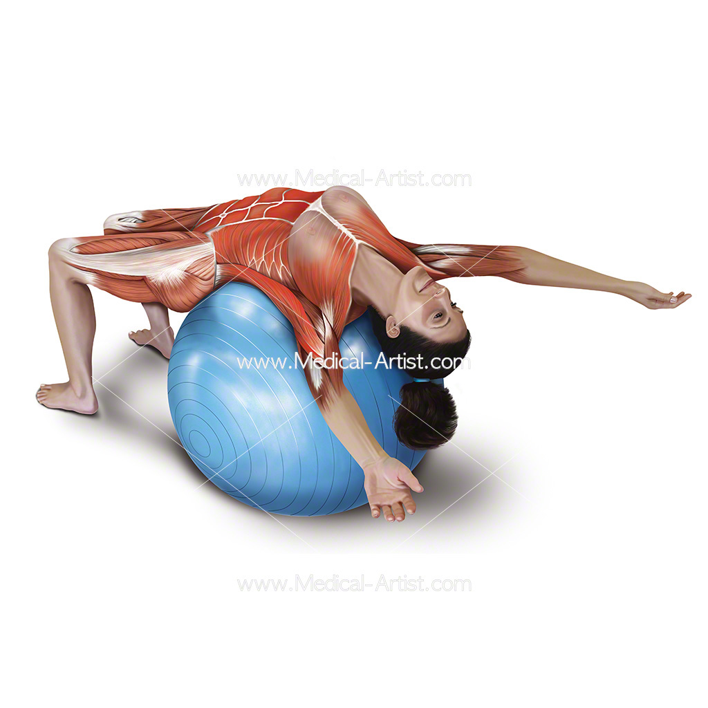 Medical illustration of the supported adbomen stretch