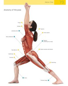 Example of page spread of anatomy of the yoga pose